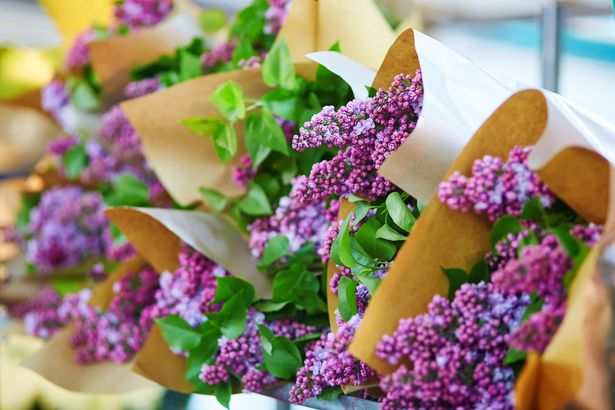 lilacs at market