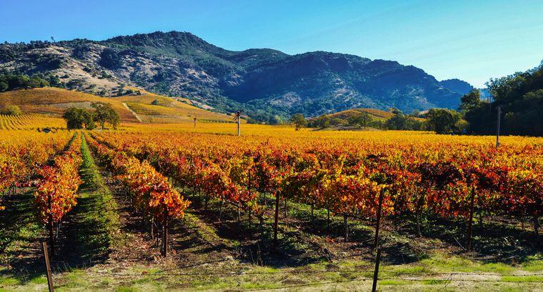 Fall in Napa Valley, California