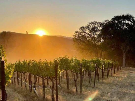 Six Sigma Ranch and Winery, Lower Lake