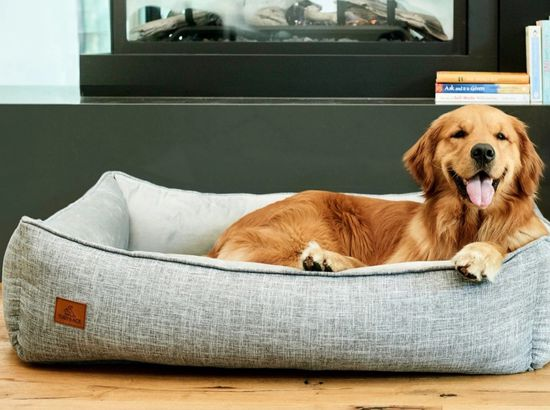 The Buddy Dog Bed